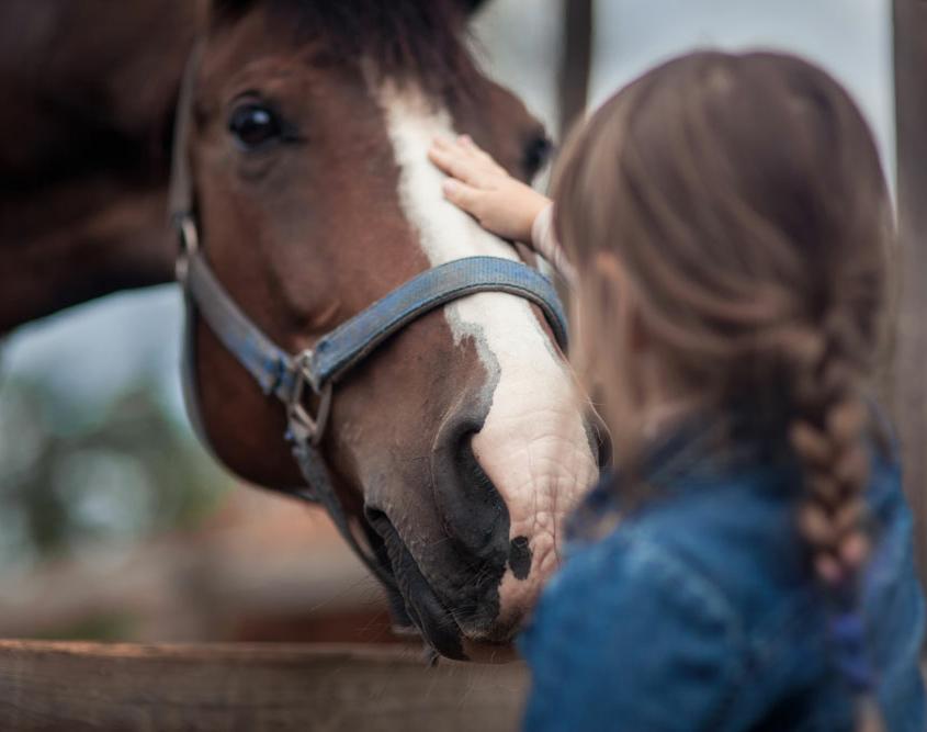 Reitpädagogik/Heilpädagogische und therapeutische Förderung mit Pferden